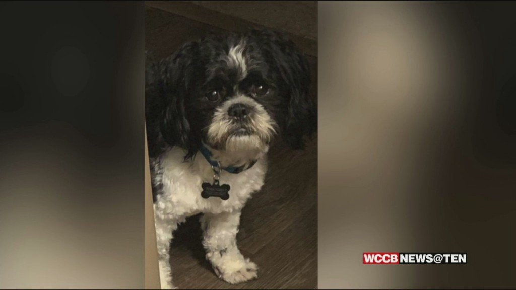 Missing Dog Adopted