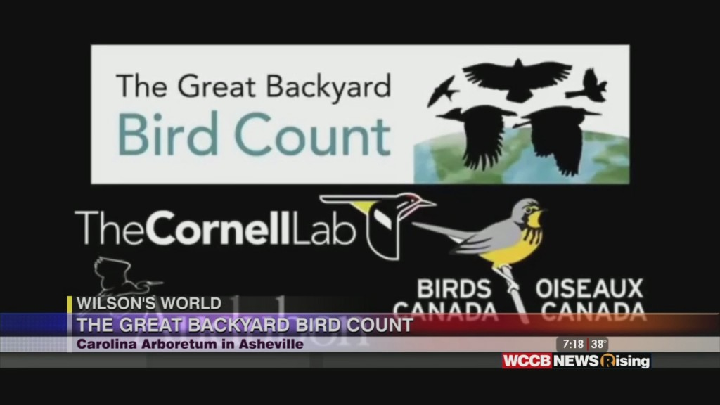 Wilson's World: The Great Backyard Bird Count With North Carolina Arboretum