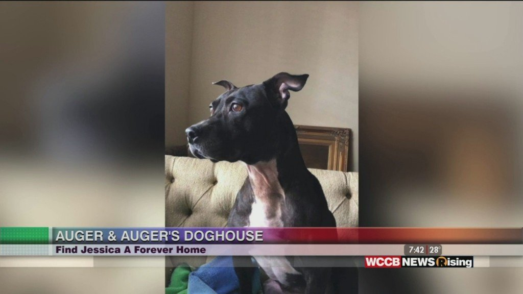 Auger & Auger's Doghouse: Meet Jessica!