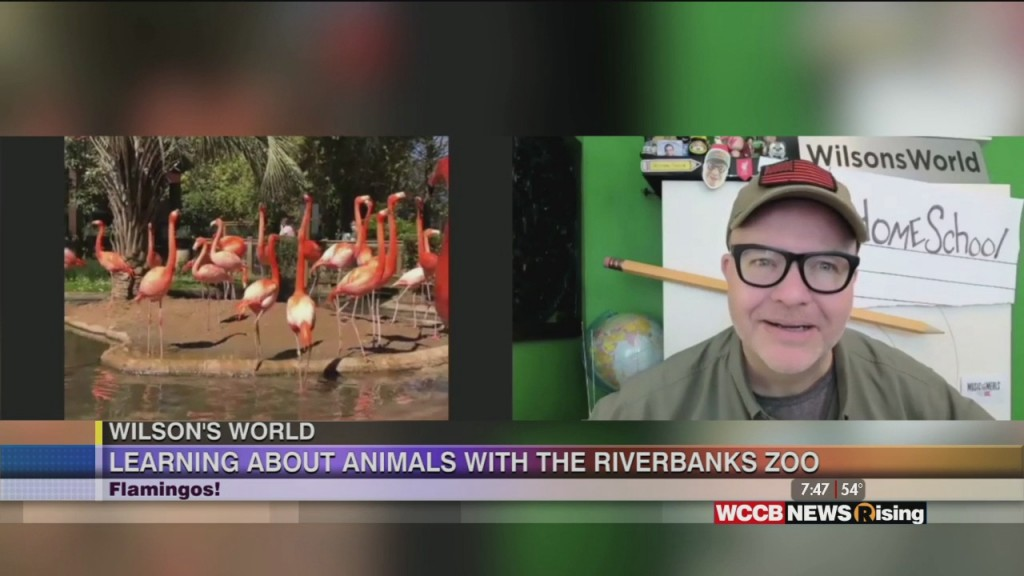 Wilson's World Homeschool: It's All About The Flamingos At The Riverbanks Zoo