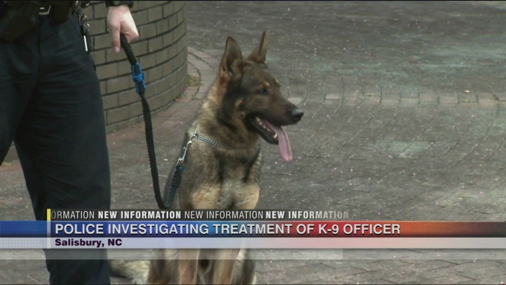 Salisbury Pd Dog Investigation