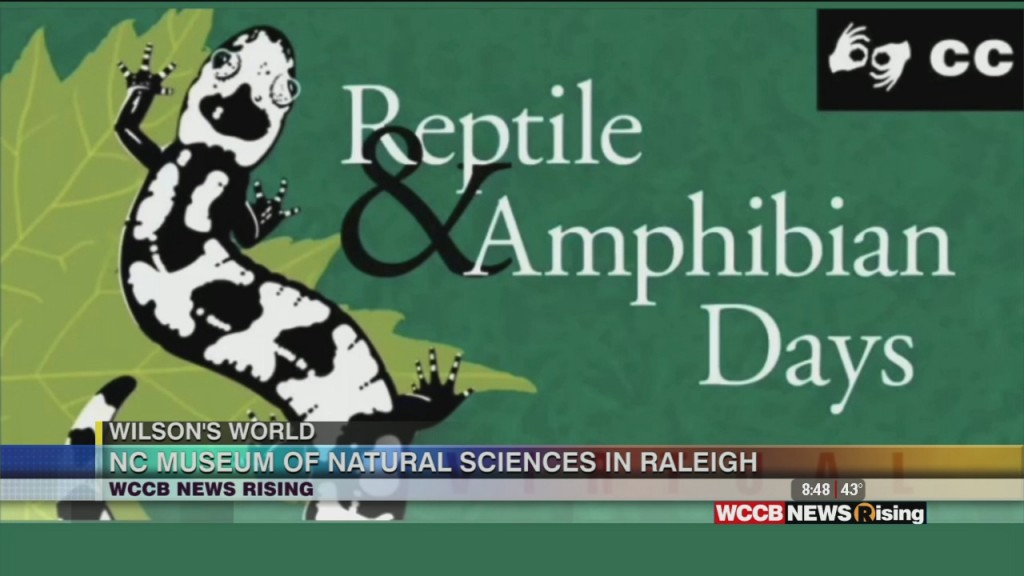 Wilson's World Homeschool: 26th Annual Reptile And Amphibian Days At The Nc Musem Of Natural Sciences