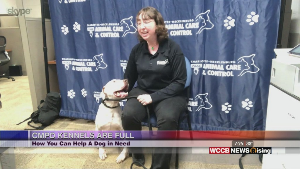 Adopt A Dog From Cmpd Animal Care & Control