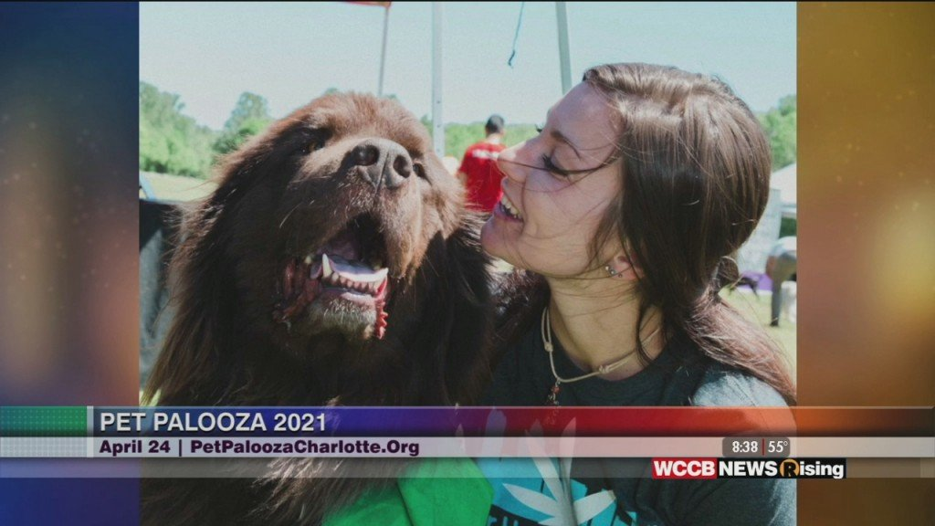 Rising Spotlight: Charlotte Humane Society Pet Palooza Rerouted
