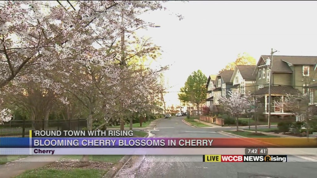 'round Town With Rising: Cherry