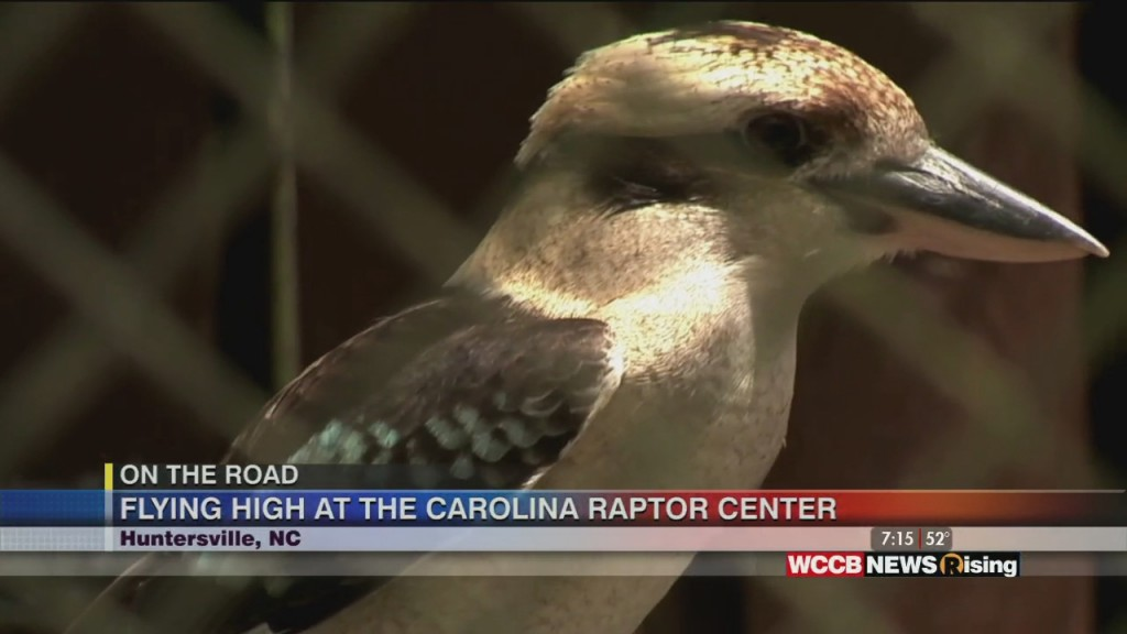 Jotr Carolina Raptor Center