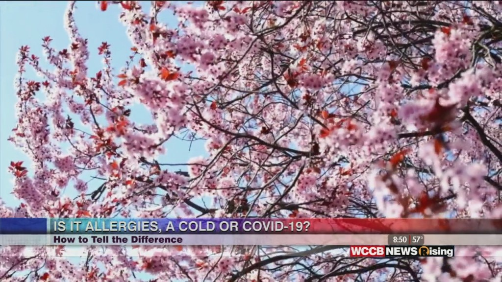 Healthy Headlines: Is It Allergies, A Cold Or Covid 19? How To Tell The Difference
