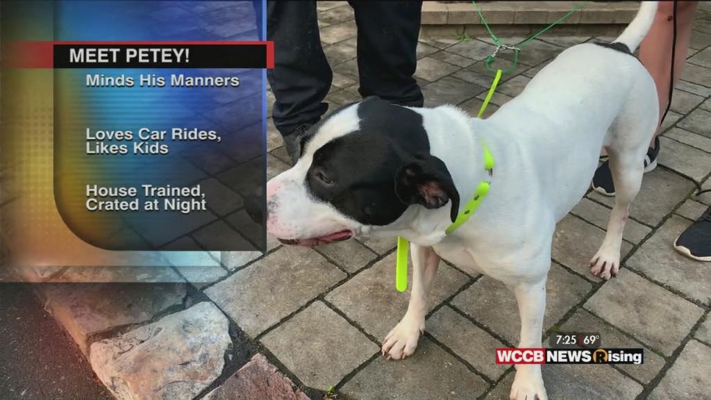 Auger & Auger's Doghouse: Meet Petey!
