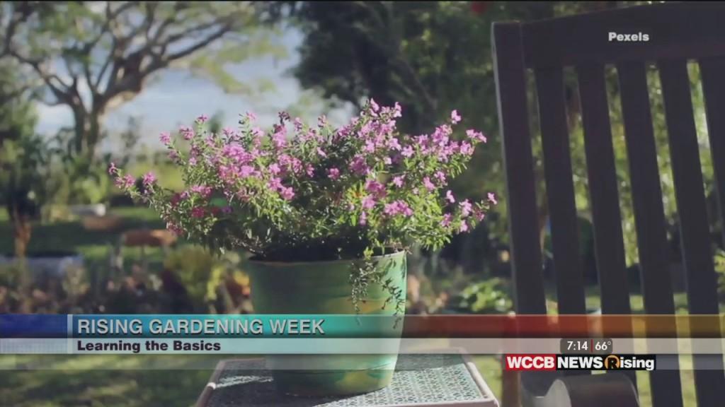 Rising Gardening Week: Learning The Basics