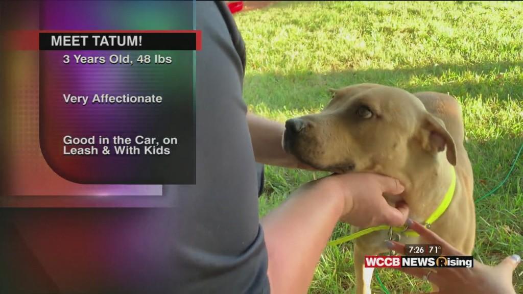 Auger & Auger's Doghouse: Meet Tatum!