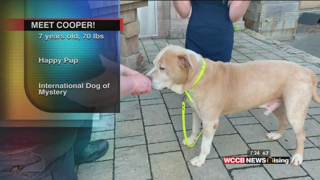 Auger & Auger's Doghouse: Meet Cooper!