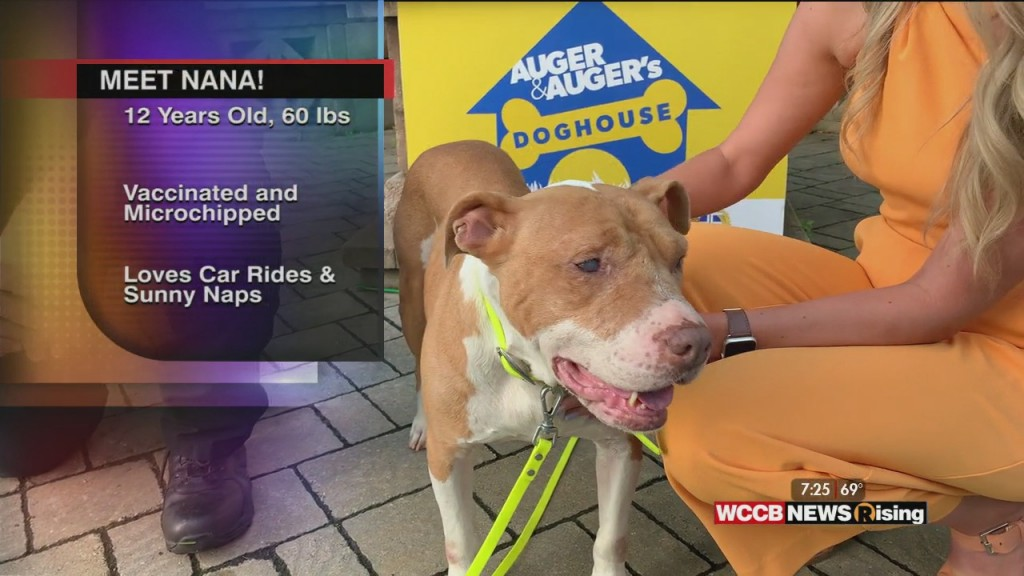 Auger & Auger's Doghouse: Meet Nana!
