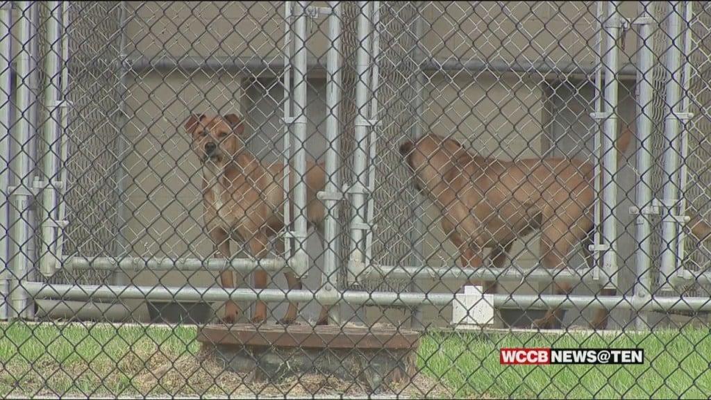 Chesterfield Animal Shelter No Kill Status