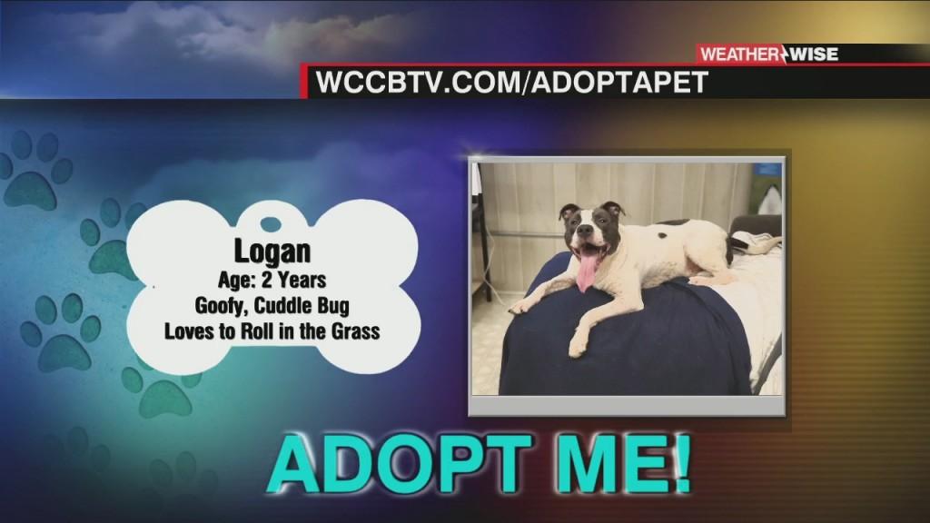 Auger & Auger's Doghouse: Meet Logan!