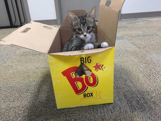 Kitten In Big Bo Box