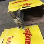 Kitten In Big Bo Box 2