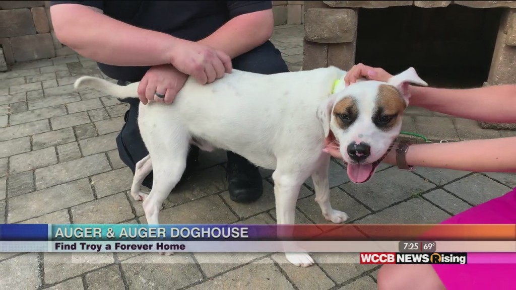 Auger And Auger's Doghouse: Meet Troy