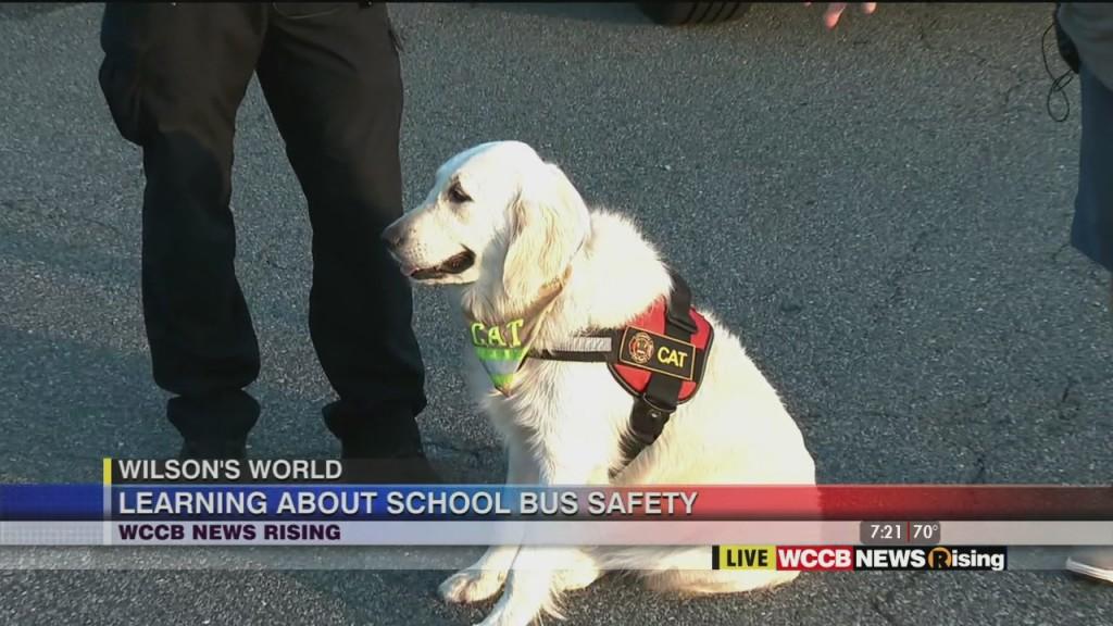 Wilson's World: School Bus Safety