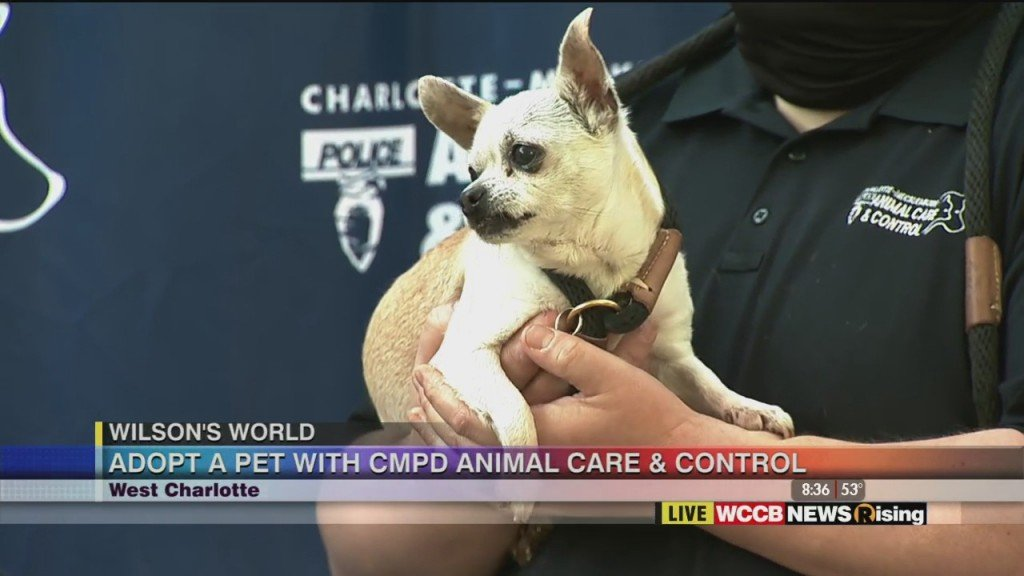 Wilson's World: Adopt A Pet With Cmpd Animal Care & Control