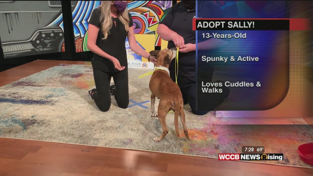 Auger & Auger's Doghouse: Meet Sally!