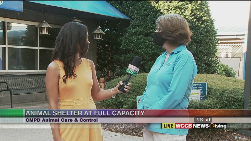 Cmpd Animal Care & Control Seeking Community Support As Shelter Is At Full Capacity