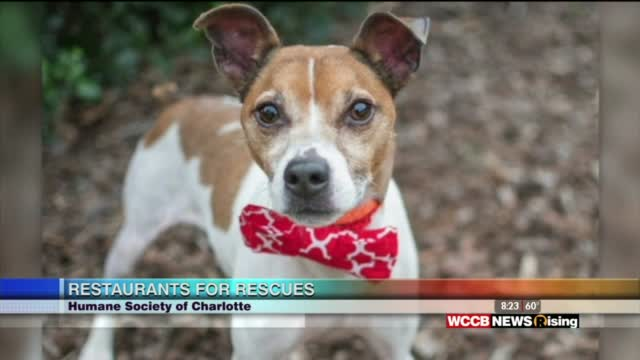 Rising Spotlight: Humane Society Of Charlotte 4th Annual Restaurants For Rescues