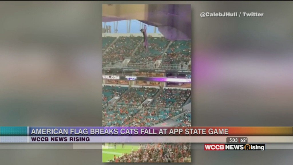 Football Fans Save Cat During Fall