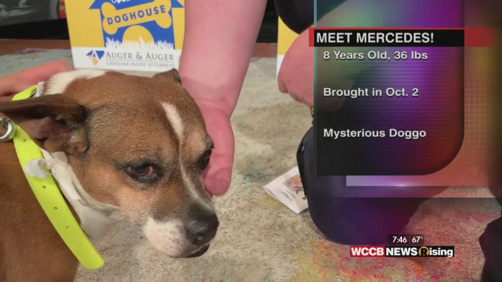 Auger & Auger's Doghouse: Meet Mercedes!