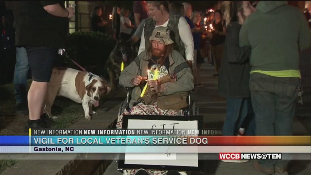 Homeless Veteran's Dog Hit And Killed
