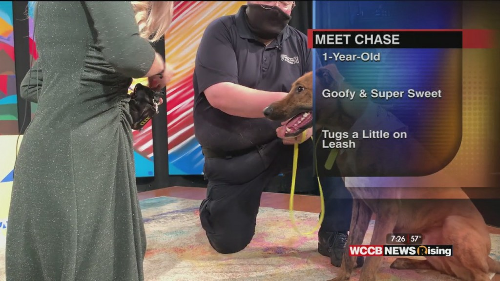 Auger & Auger's Doghouse: Meet Chase!