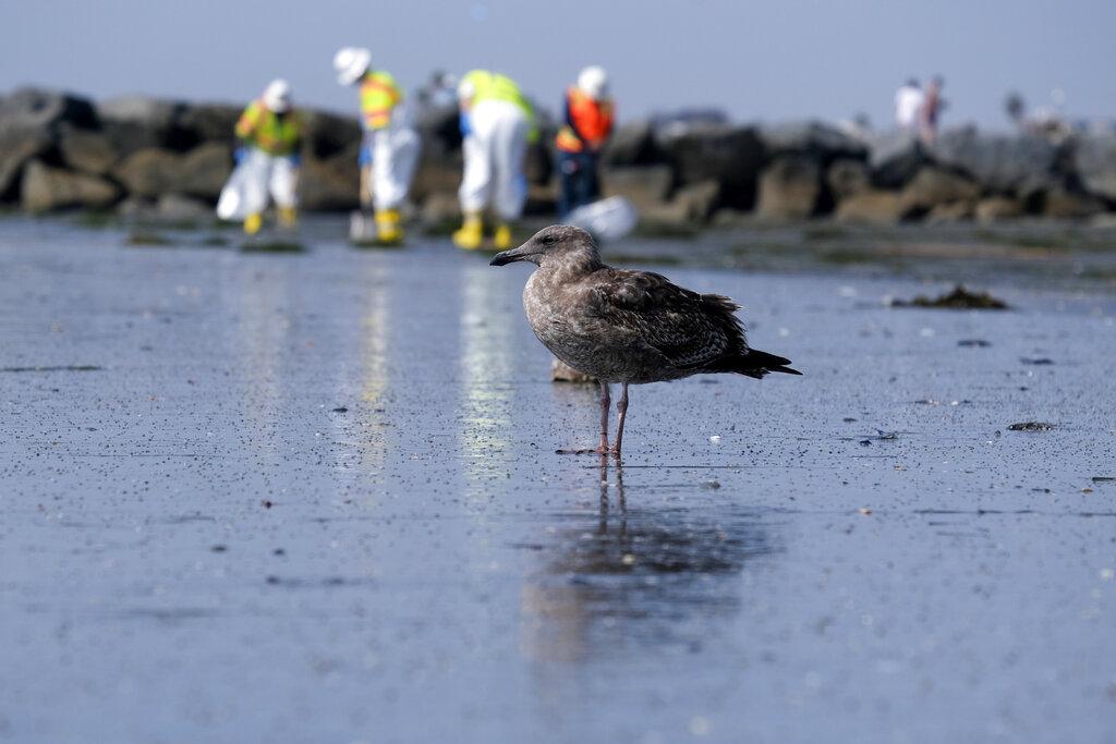 California Oil Spill Environment