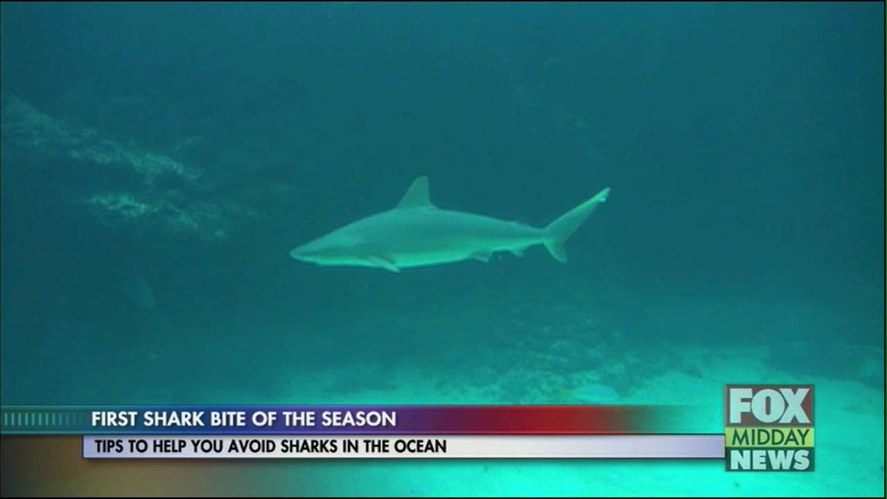 How To Avoid Sharks In The Ocean This Summer