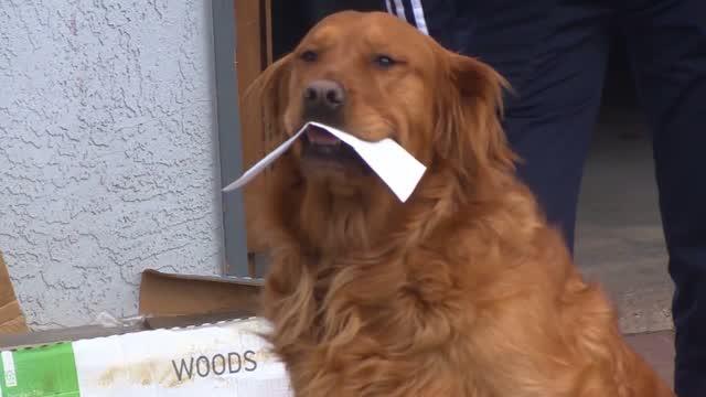 Co: Covid: Dog Helps Quarantined Neighbors