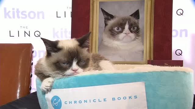 Az: Judgy Cat Goes Viral, Finds Furrever Home