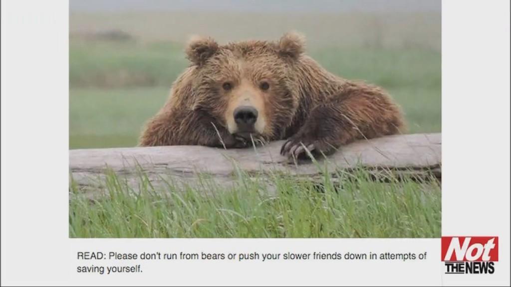 Bear Reminder
