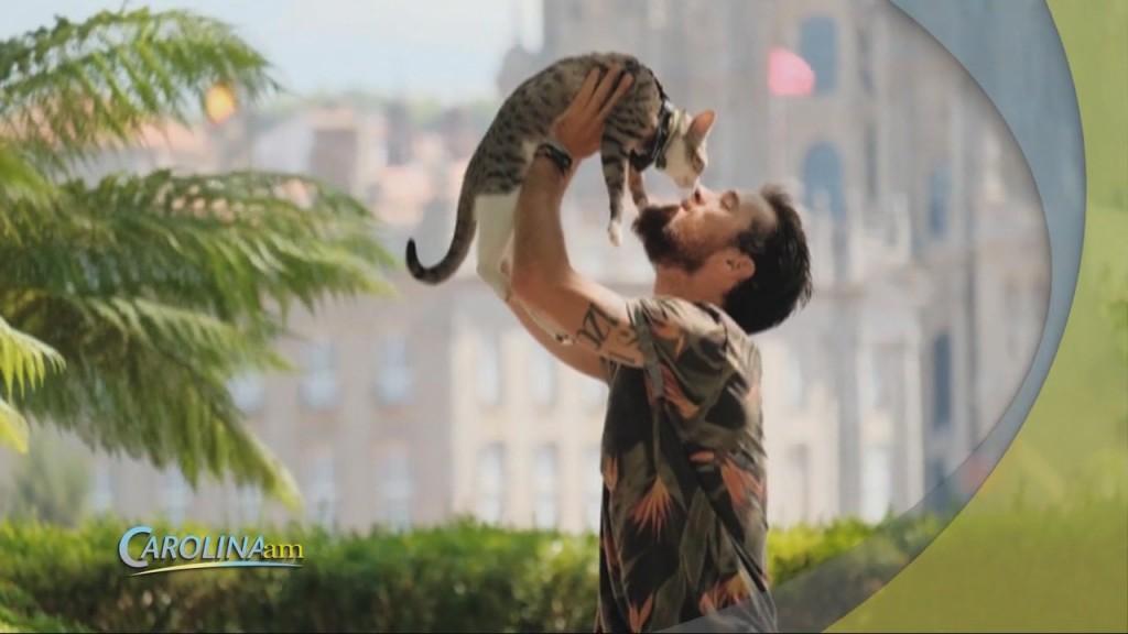 Cat Dating
