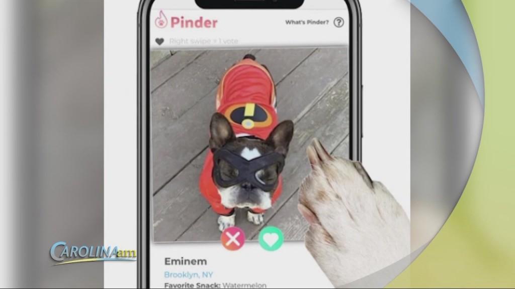 Pet Dating Site
