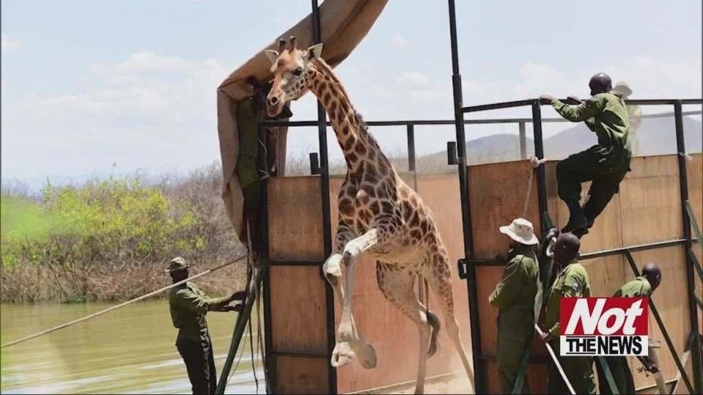 Giraft