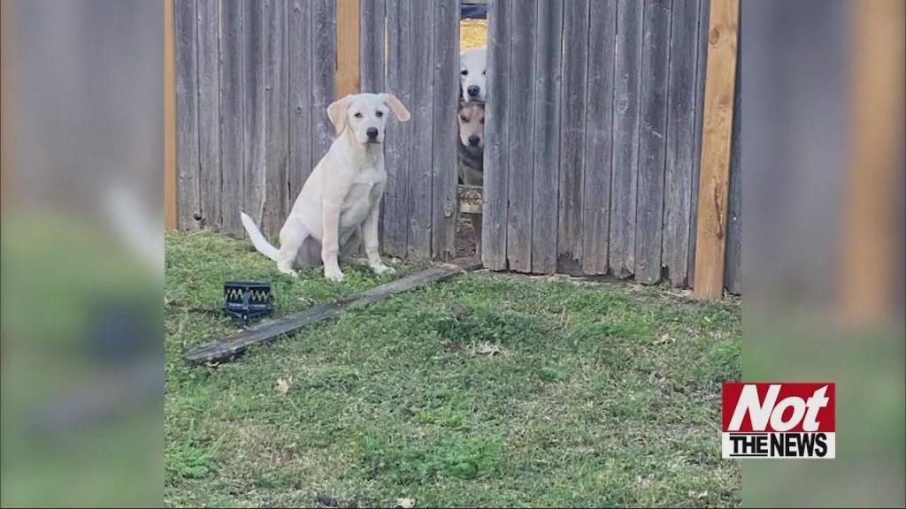 Dog Jail Break