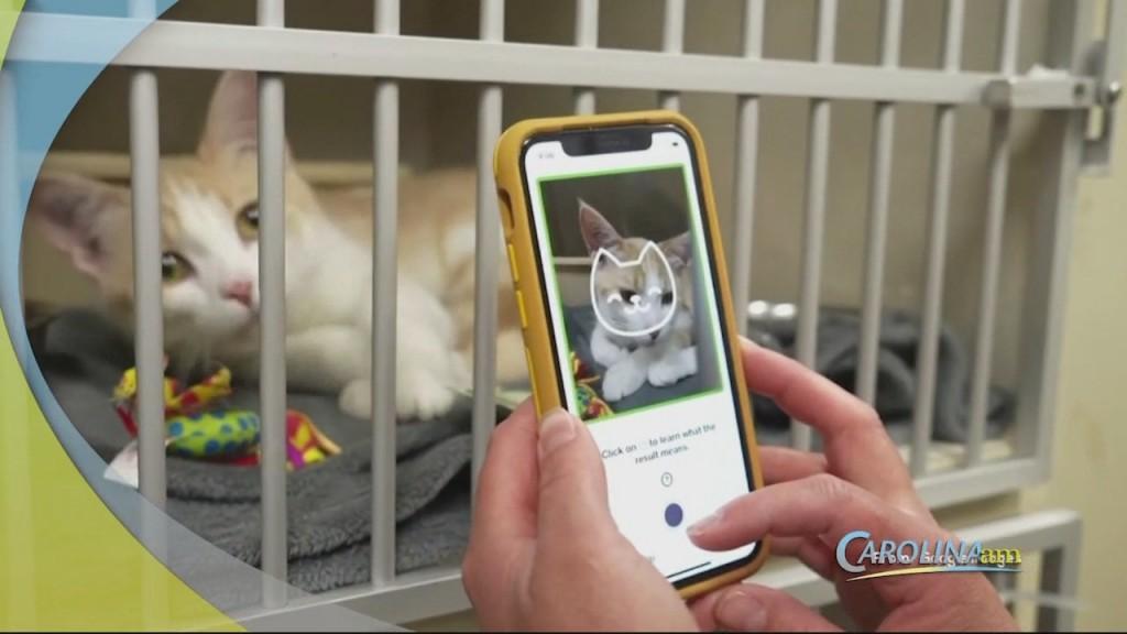 Cam 0730 Cat App