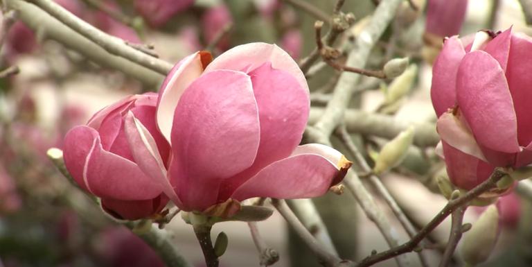 Doctors Advise Caution For Springtime Allergy Season 47abc