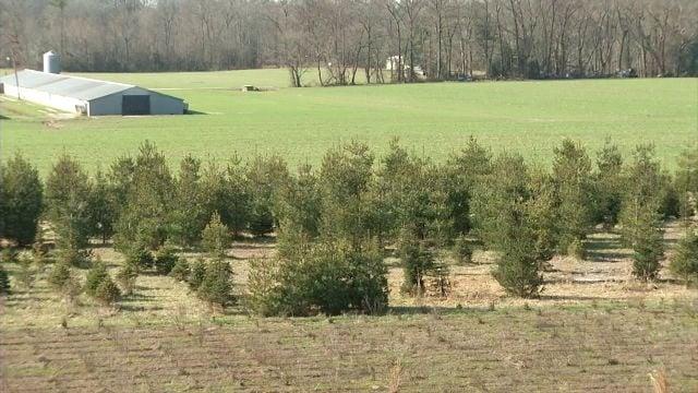 Nichols Tree Farm Archives 47abc