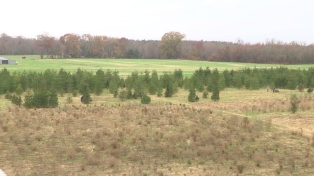Families Search For The Perfect Tree At Nichols Tree Farm 47abc