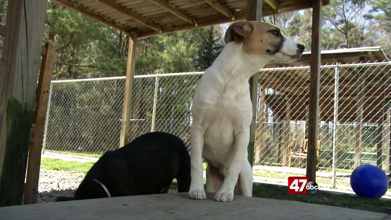 60+ dogs make their way to Brandywine Valley SPCA, looking