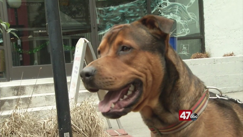 Pets On The Plaza: Meet Spuds