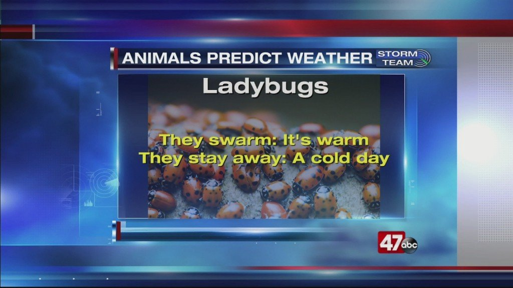 Weather 101: 3.20.20 (animal Predictions)