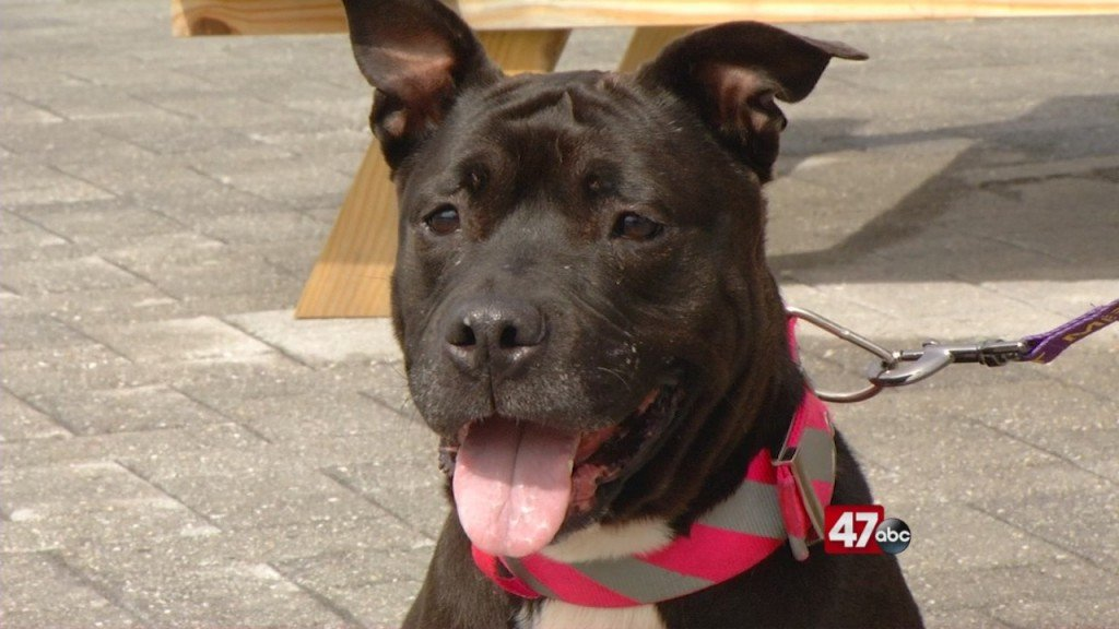 Pets On The Plaza: Meet Maggie