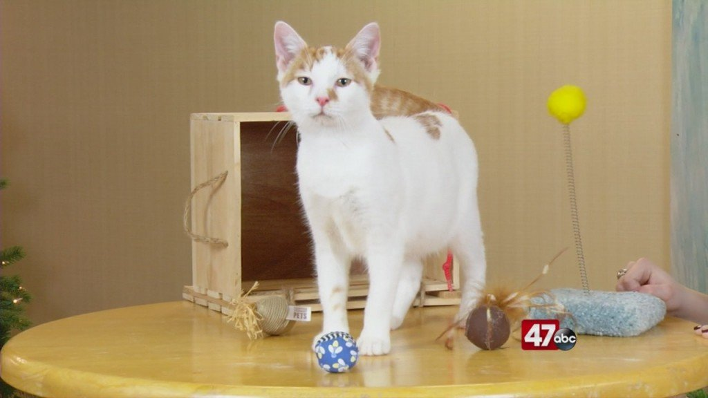 Pets On The Plaza: Meet Ozzy