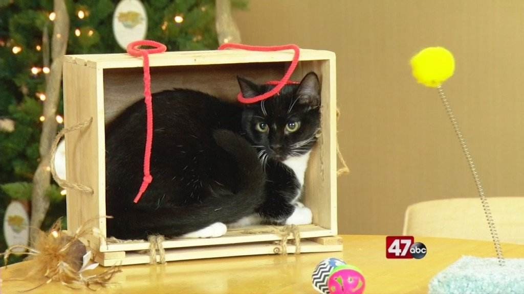 Pets On The Plaza: Meet Bristol