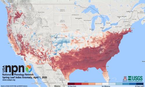 leafout - Allergy Season 2020: Spring Flowers Blooming Ahead of Schedule